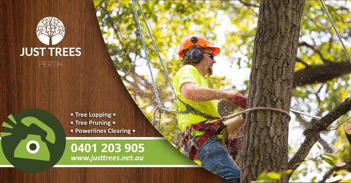 tree loppers perth - tree removal perth
